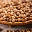 Coriander seeds — Stock Photo #21530085