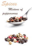 Mix of peppercorns — Stock Photo