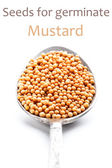 Mustars seeds — Stock Photo