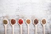 Samling av kryddor — Stockfoto