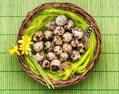 Quail spotted eggs — Stock Photo