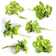 Curly parsley — Foto Stock