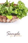 Herbs in basket — Stockfoto