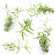 Stock Photo: Rosemary twigs