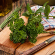 Curly parsley leaves - Stock Photo
