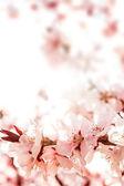 Rosas flor — Foto de Stock