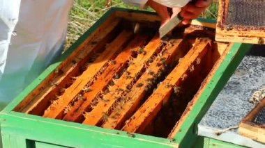 养蜂人工作 — 图库视频影像