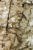 Bark of tree — Stock Photo