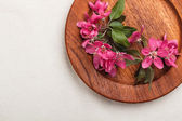 Pink fruit-tree flowers — Stock Photo
