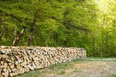 Felled tree — Stock Photo