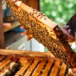 Frame of honeycomb — Stock Photo