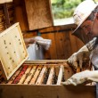 Working apiarist — Stock Photo #26437489