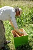 Včelař — Stock fotografie