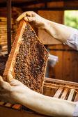 Honeycomb — Stock fotografie