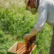 Working apiarist — Stock Photo