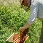 作業の養蜂家 — ストック写真