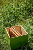 Wooden beehive — Stock Photo