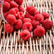 Raspberries — Photo