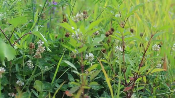 Exuberante vegetación — Vídeo de stock