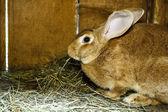 Rabbit in cage — Stock Photo
