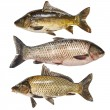 Fish collection — Stock Photo #30446085