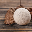 Common puffball — Stock Photo #31074285