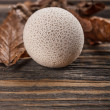 Common puffball — 图库照片