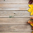 Autumn leaves — Stock Photo #33265785