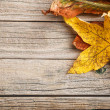 Autumn leaves — Stock Photo #33265957