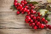 Marco de hawthorn berries — Foto de Stock