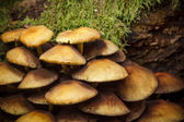 Mushrooms in forest — Stock Photo