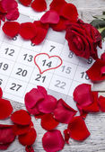 Red rose on calendar — Stock Photo