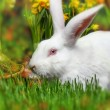 Stock Photo: Little white rabbit