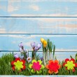 Stock Photo: Spring time