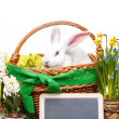 Stock Photo: White easter rabbit