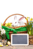White easter rabbit — Stock Photo