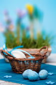 Blue quail eggs — Stock Photo