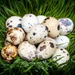 Stock Photo: Spotted quail eggs