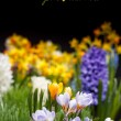 Stock Photo: Springtime in garden