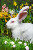 Easter rabbit  — Stock Photo