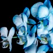 Blue orchid — Stock Photo #48536435