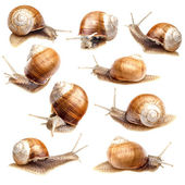 Snail collection — Stock Photo