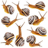Set of the garden snail  — Stock Photo