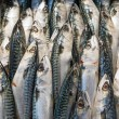 Mackerel Fish at the market — Stock Photo