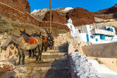Mules waiting on Santorin — Stock Photo