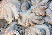 Fresh octopuses at the market — Stock Photo