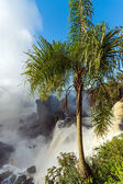 Palm tree and waterfall — Stock Photo