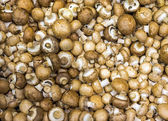 Brown champignons for sale — Stok fotoğraf