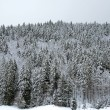 Winter landscape, Black Forest — Stock Photo
