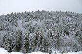 Winter landscape, Black Forest — Stockfoto